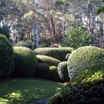 Gardening Northside Hedging & Topiary - Burns Rd Wahroonga