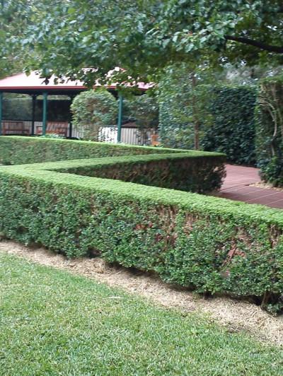 Gardening Northside Hedging, Lawns & Garden
