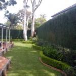 Retaining wall and brick edges around the hedge