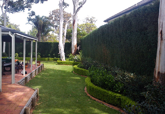 Hedge Trimming in Wahroonga
