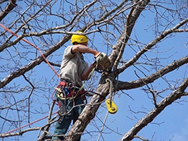 tree removal hornsby