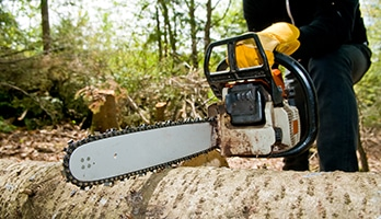 tree removal north shore, tree removal north shore sydney